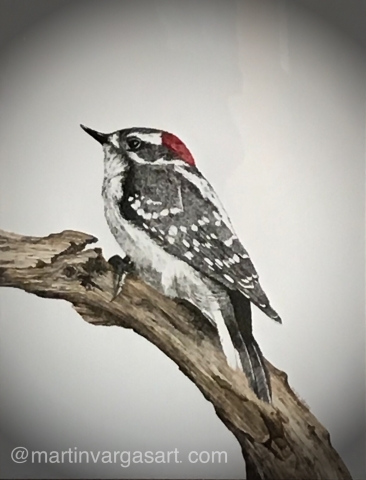 A pastel drawing of a woodpecker sitting on a branch